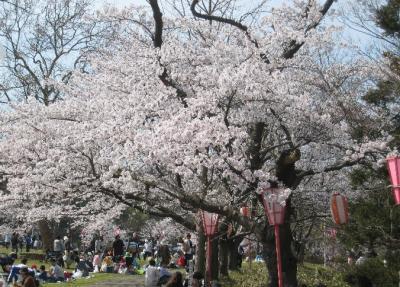 観桜会赤坂山01
